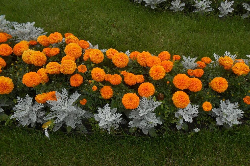 нам того, цветники каскадные с шафранами и бархатцами фото научиться лепить цветы